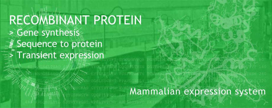 Recombinant protein expression